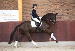 Blom's Fürstentanz selected for Excellent Dressage Sales - 14 March 2015